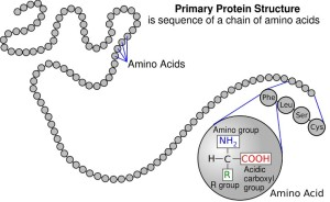 protein and amino acid figure